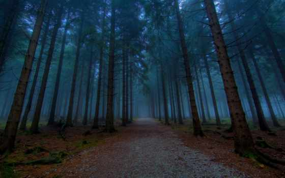 тумане, лес, дорога, хвойный, лесу, сквозь, вечер, разных, разрешениях, туман,