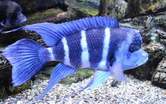 аквариум, arka, pisces, akvaryum, xperia, рыбки, fon, zl, sony, samsung,