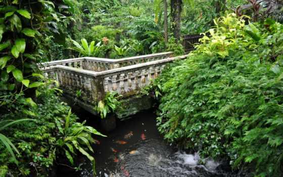 kuala, lumpur, park, бабочка, парки, malaysia, природа,