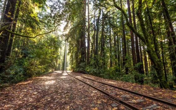 tracks, railroad, поезд, лес, trees, rails,