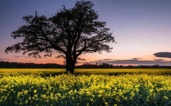пейзаж, поле