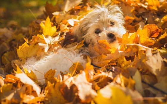 twitart, осень, march, листья, омь, sunday, satiscan,