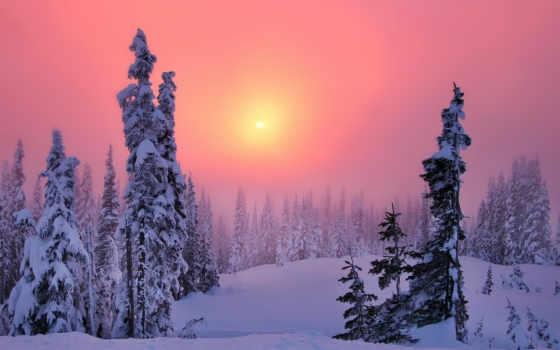 zakat, zima, les, taiga, вечер, хвойный, просмотреть,