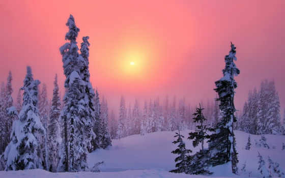 zakat, zima, les