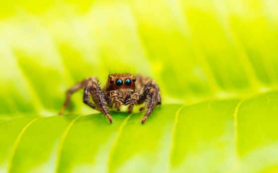 следы, паук, интересные, лист, зелёный, паучок, макро, desktop, пауках, фон,