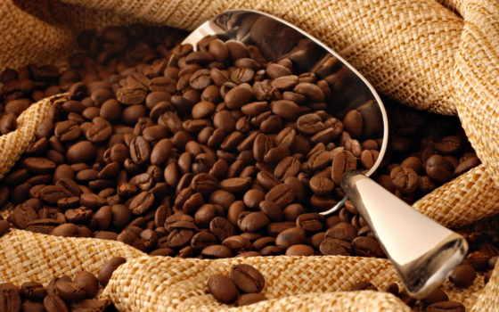 coffee, выращивание, кофейного, дерева, следы,