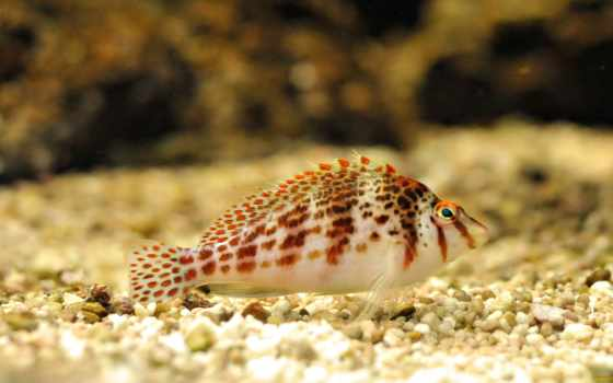 рыбки, pisces, world, красивые, pictures, аквариум, fish, underwater, аквариумные,