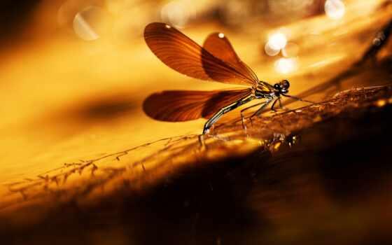 стрекоза, трава, насекомое, libélula, pantalla, flare, sony, крыло, свет