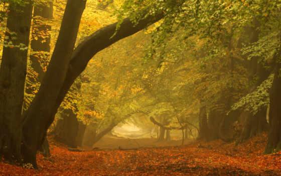 осень, пейзаж, парк