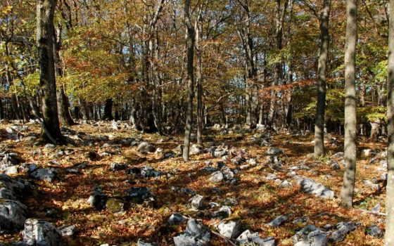 природа, времена, года, seasons, осень, feltöltve,