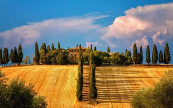 italy, tuscany, сиена, деревья,