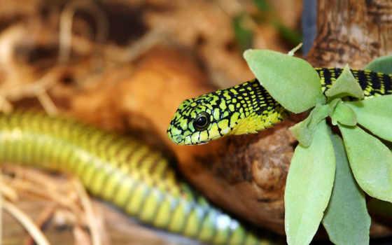 зелёный, snake, аватары