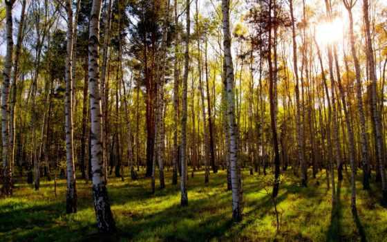 лес, mixed, sun, grove, трава, зелёный, листва, природа, день,