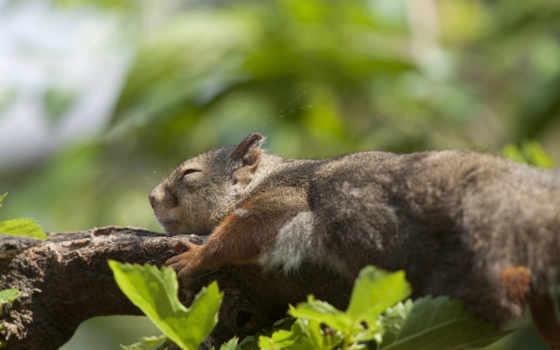 белки, дерево, браун, листья, fondos, branch, спать, top,