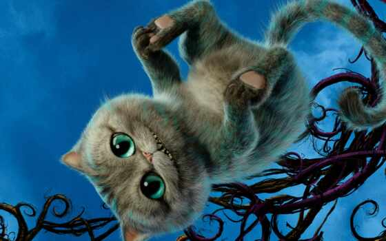 alisa, strana, чудо, kot, cheshirskii, чеширский, кот, кошка, алиса, wonderland, сниматься