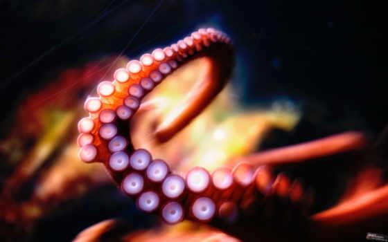 щупальца, осьминог, украинского, часть, спрута, офшорные, осьминога, моллюск, денег,