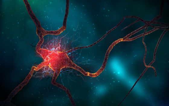 нейроны, нейрон, synapse, поезд, neurons, острие,