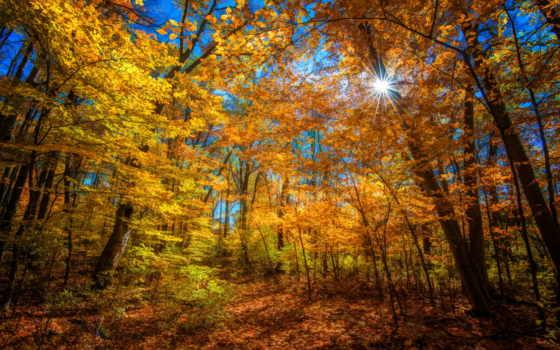 осень, sun, rays, лес, яркий, trees, color,