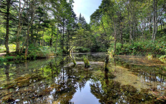 лес, река, природа, озеро, трава, clear, landscape, lakes, туман, peaceful, mist,