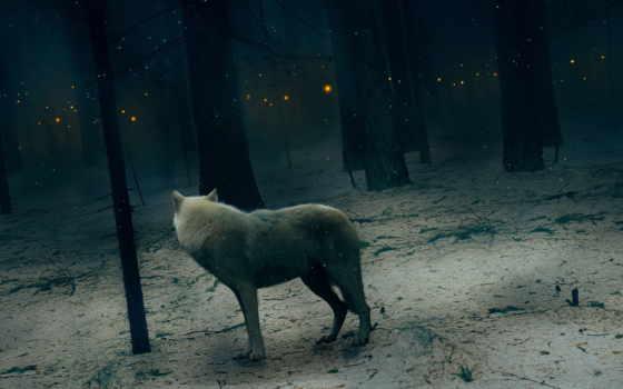 волк, deviantart, волки, xlocky, gallery, art, entry, лучшая, фотографий, коллекция,