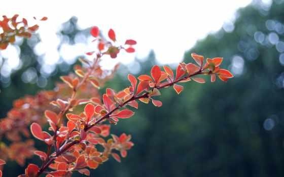 листва, свет, природа, макро, осень, прикольные, блики, большой, сниму, севастополе,