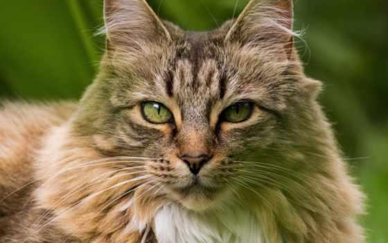 кошки, zhivotnye, коллекция, кот,
