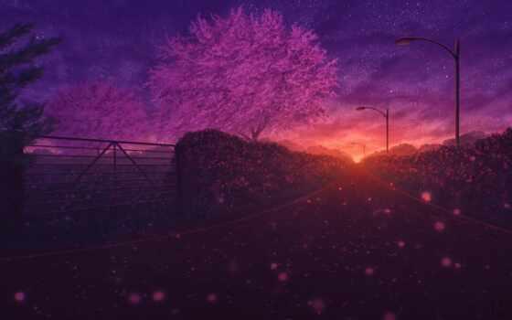 anime, весна, Сакура, ночь, landscape, лепестки, shirokoformatnyi, закат, дорога, дорогой, notebook