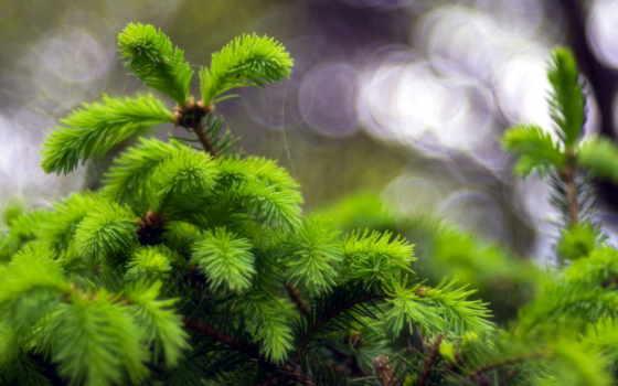 макро, природа, дерево