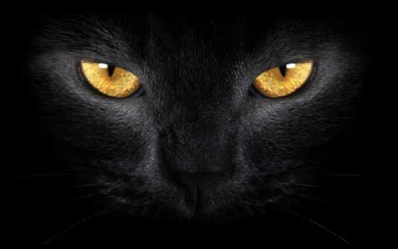 кот, черная, свет