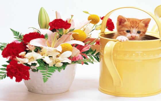 zhivotnye, цветы, войдите