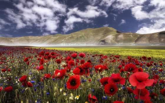 умбрия, italian, umbria, цветы, горы, маки, italy, васильки, луг, castelluccio, apennines,
