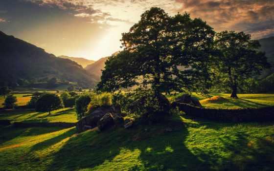 ирландский, summer, ireland, дерево, природа, photos, зелёный, день, rylik, страница,