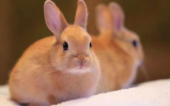 кролик, рюкзак, уши, кроликов, золотистый, rabbids, товар, бесплатная,