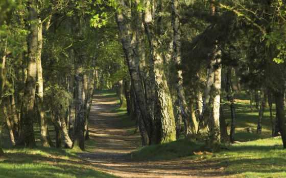 лес, тропинка, лесу, яndex, пользователя, коллекциях, летом, коллекция, card, www,
