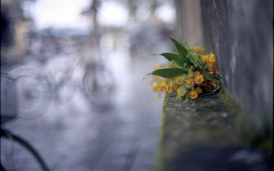 макро, самый, cvety, bike, город, об, flowers,