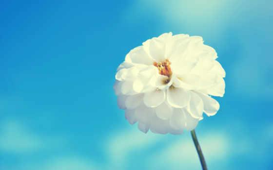flowers, white, цветы, небо, blue, free,