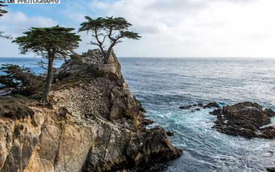 cypress, lone, дерево, arbre, cet, san, ест, was,