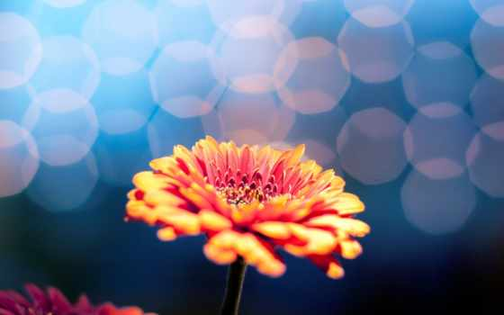 цветы, фон, full, blue, экран, flowers, природа