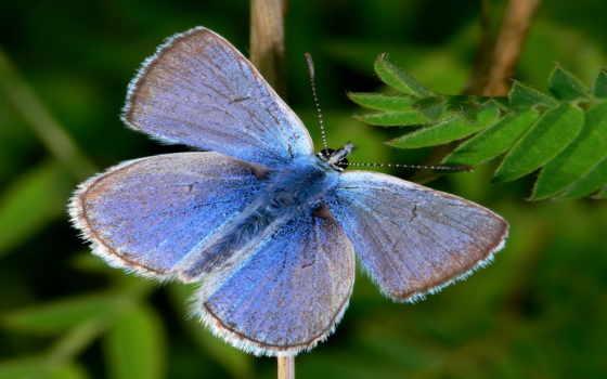 природа, красивая бабочка Фон № 2281 разрешение 1920x1080