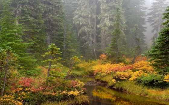 naturaleza, bosque, fondo, pantalla, rboles, río, sobre, malva, reflexión,