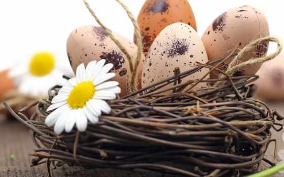 tapety, veľkonočné, obrázky, pozadia, vajcia, harmanček, plochu, eggs, яйца, красивые,
