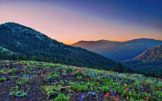 горы, поляна, лес, леса, цветов, rising, cvety, природа, закат, небо, озеро,