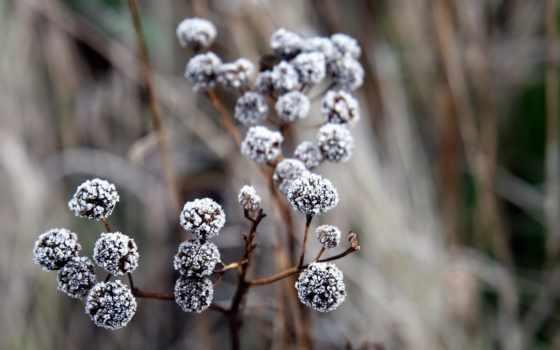 иней, branch, ягоды, макро, растение, трава, природа, фоны, лед, почки, прозрачные,