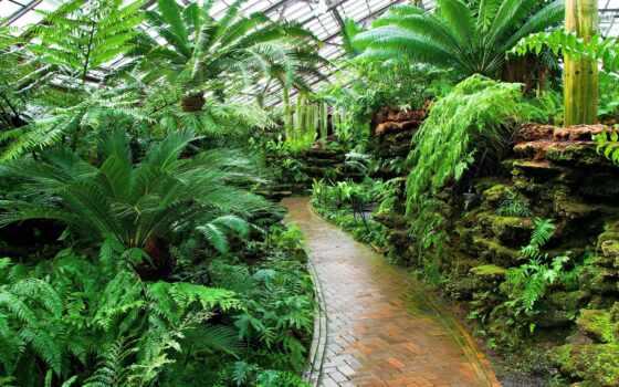 botanical, garden, растение, resolution, качество, jungle, fore