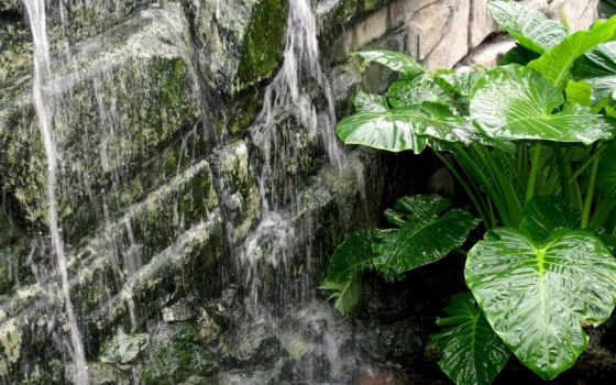 льётся вода, зелёный цветок
