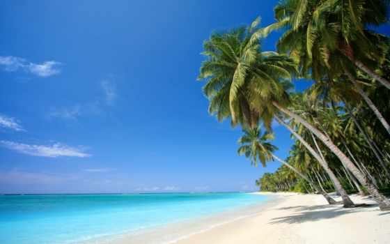 пальмы, тропики, пляж, песок, море, картинка,
