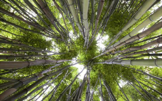 ниже, взгляд, природа, зелёный, бамбук, небо,