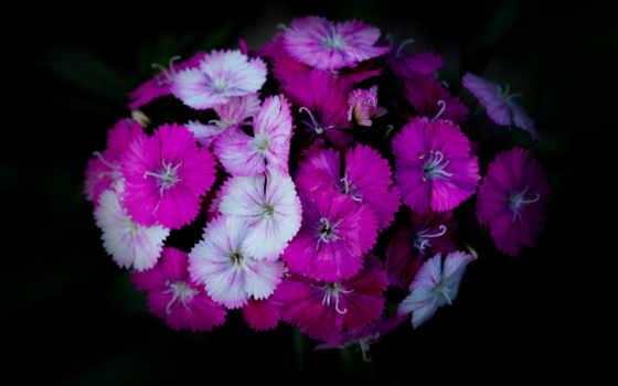 purple, цветы, букет,
