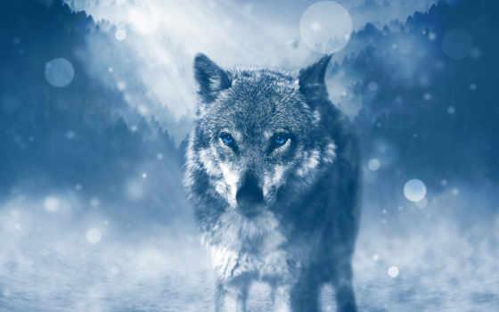 und, neue, sonne, waage, сердце, волк, vás,