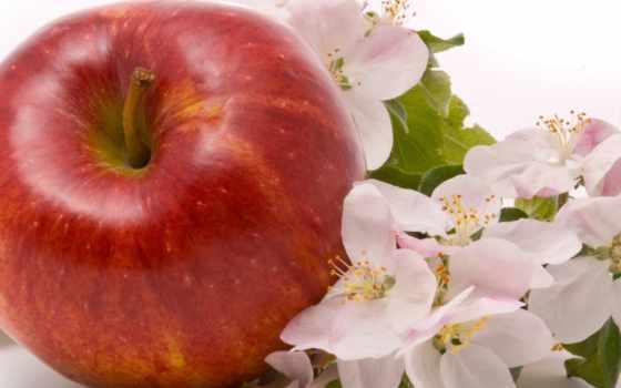 apple, cvety, яблоки